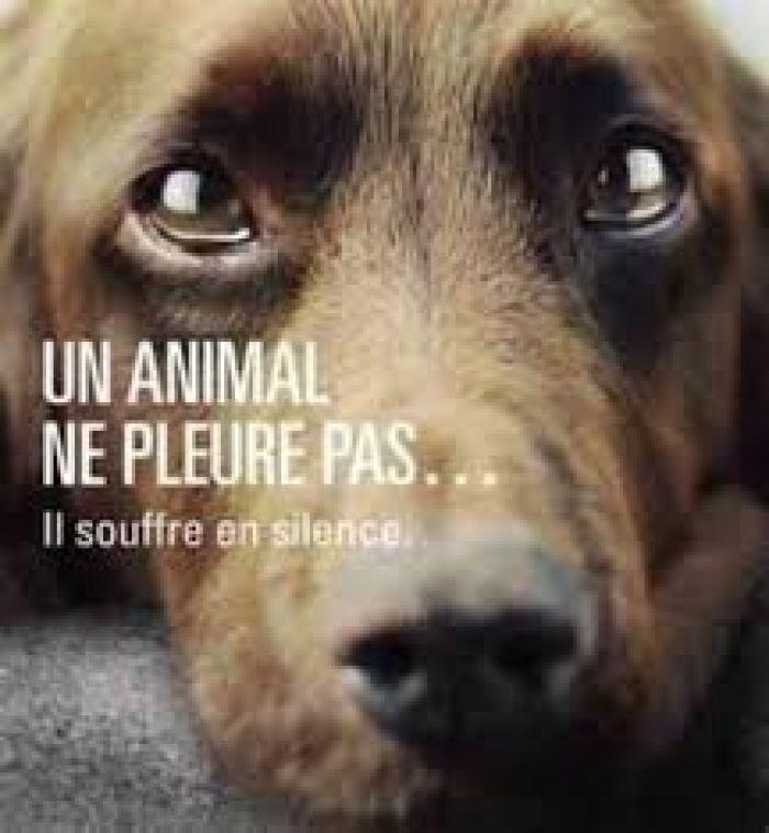 L'animal est un être comme les autres
